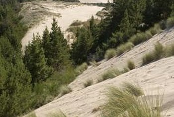 Grasses that thrive in rocky soil also tend to tolerate drought.