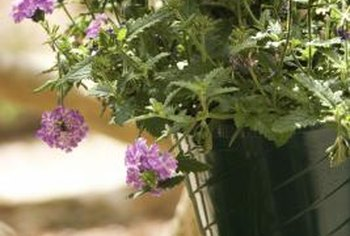 Growing vegetables in hanging planters can add beauty in your home.