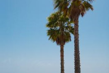 Palm trees, though attractive, can sometimes overwhelm a property.