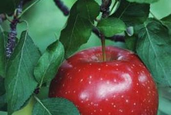 A red apple against green leaves is an example of a complementary color scheme.