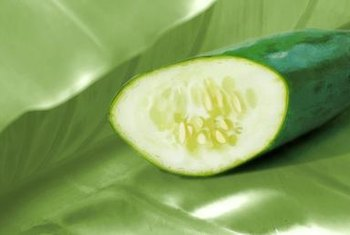 Healthy cucumbers, undamaged by frost, are firm and dry.