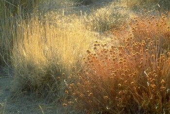 Ornamental grasses create a prairie effect.