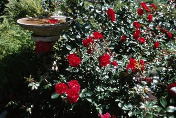 Incorporating a birdbath with your plants adds interest to your garden.