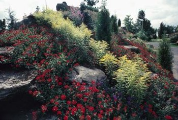 A rock garden is often the best solution for an arid or semi-arid slope.
