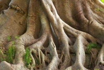 The majority of tree roots underground are fine and hairy instead of woody.