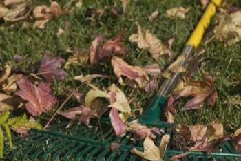 A narrow, lightweight rake helps remove leaves from a flower bed.
