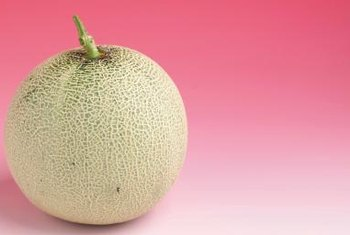 Small cantaloupe varietes are well suited to container gardens.