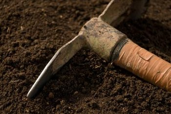 A hoe quickly pulls up mounds of soil for planting.