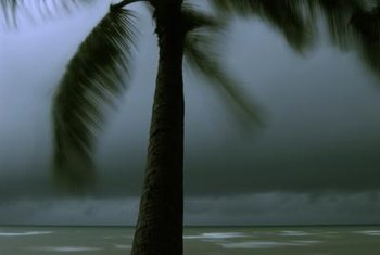 Choose a wind-tolerant palm tree for planting near the coastline.