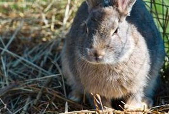 Homemade hay makes valuable fodder for small animals like pet rabbits.