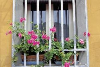 Bright pink geraniums do well in a window box with a southern exposure.