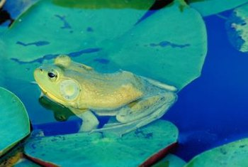 Pond plants provide food for fish, amphibians and other wildlife.