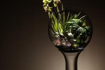 For a larger bottled look, plant mature orchids in a glass-walled terrarium.