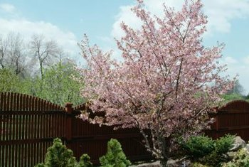Flowering trees add seasonal interest, and evergreen hedges are a good year-round anchor in the landscape.