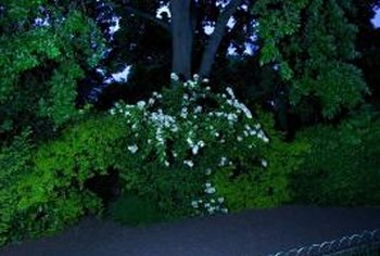 White, fragrant flowers attract moths to a garden in moonlight.