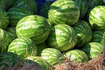 Improve your watermelon yield with grafting.
