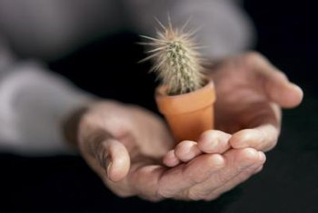 Small, spiny cacti grow well indoors as potted plants and produce colorful flowers.