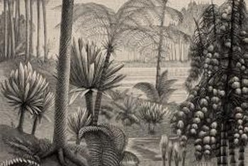 Cycads such as the sago palm were present when dinosaurs still roamed the earth.