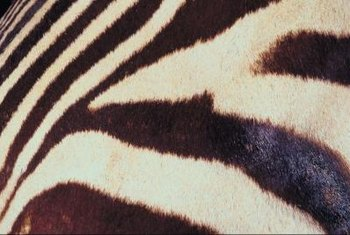 A zebra print's neutral black and white stripes works well with almost any office theme.