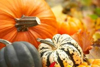 Pumpkin and squash can be grown together, but cross pollination between the two can occur.
