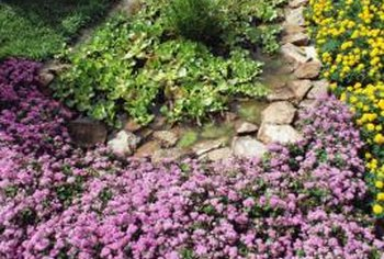 Low-growing perennials frame a stone path.