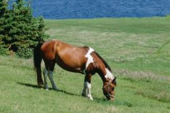 It is important to know what your horse is grazing on.