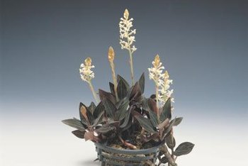 Orchid pots are available in a variety of materials, including ceramic and plastic.