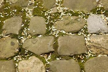 Moss Can Fill In The Gaps Between Flagstones With A Soft Carpet.