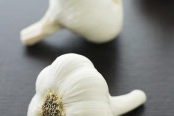 Each clove in a garlic bulb grows into a new plant.