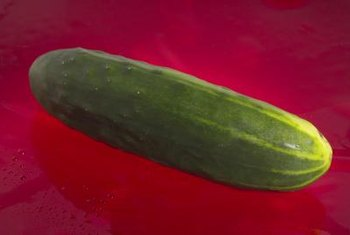 All varieties of cucumber will grow in a greenhouse.