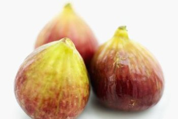 """Chicago Hardy"" brings homegrown figs to gardeners in unexpectedly cold places."