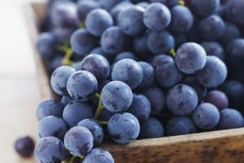 Concord seedless grapes ripen a blue-black color.