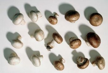 Grow button mushrooms indoors in a mere six to seven weeks.