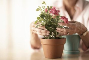 Mold can spread from one season to the next living in flower pots.