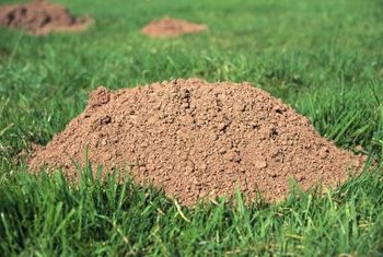 You don't often see moles above ground, but you can see their handiwork.
