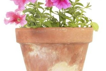 Terra-cotta pots are porous until sealed.