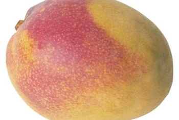 Mango fruits and the trees they grow on can be killed in cold weather.