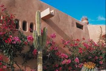 Planting a few cactuses in the landscaping creates a desert feel.