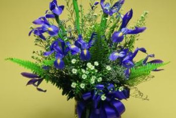 Blue florist's irises are hybrid Dutch irises that grow from a bulb.