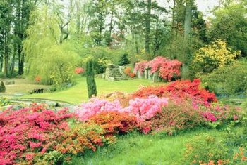 Azaleas provide a mass of spring color in the yard.