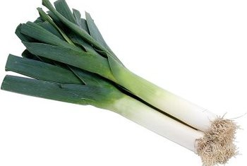 Leeks are an essential ingredient in the French potato soup vichyssoise.