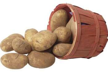 Growing potatoes in a bushel basket makes harvesting them easier.