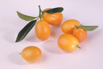 Kumquats delight fresh fruit lovers by ripening in the middle of winter.