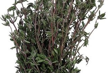 Harvest whole thyme branches and place them in whole fish to flavor it as it cooks.