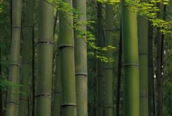 Bamboo plants infrequently flower.