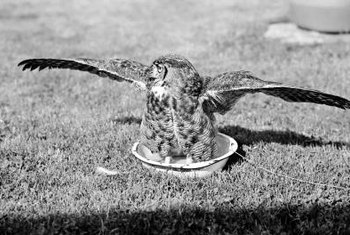 Many shallow saucer-style objects can be turned into a birdbath.