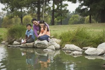 Protect your pond's ecosystem with regular cleaning.