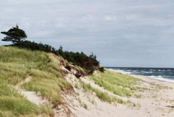 Beach grass will grow on sandy slopes and helps stabilize them.
