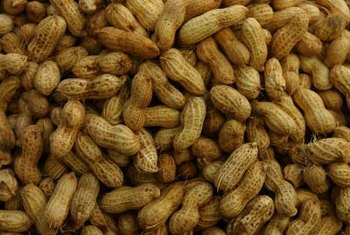 Peanuts are surprisingly adaptable to warm-climate American gardens.