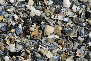 The size and color of shell pieces affect how your landscaping looks.